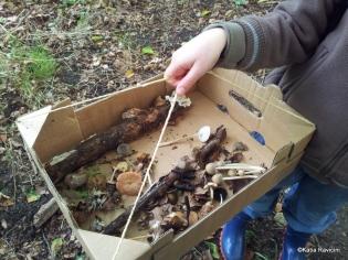 25/09/13 : Mycologie (étude des champignons). Cours + excursion et détermination des échantillons. Bois d'Havré.