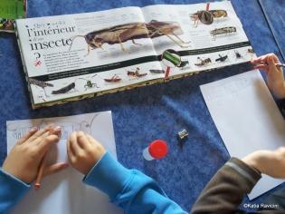 02/10/13 : Entomologie/Arachnologie (étude des insectes et araignées). Cours + recherche et identification de différents arthropodes