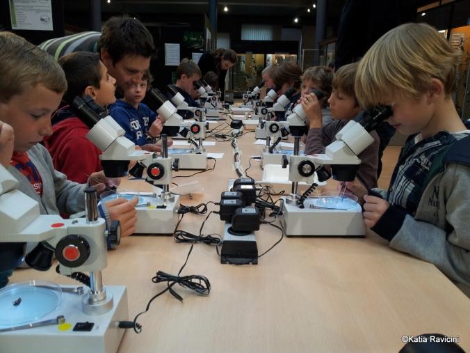 09/10/13 : Entomologie/Arachnologie (étude des insectes et araignées). Classification et observation au microscope.