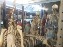23/10/13 : Mammalogie (étude des mammifères). Cours + atelier et visite des collections.